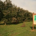 preserved-farmland-sign-at-schober-orchards